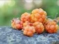 Горсть оранжевой морошки