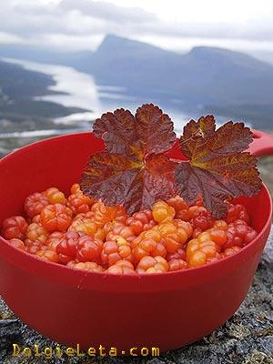 Спелая морошка с листьями в красной миске на фоне природы