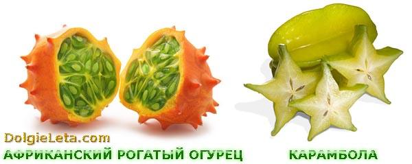 Экзотические фрукты: карамбола и африканский зелёный огурец