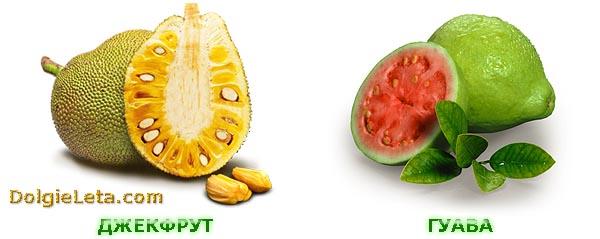 Экзотические фрукты: гуава и джекфрут