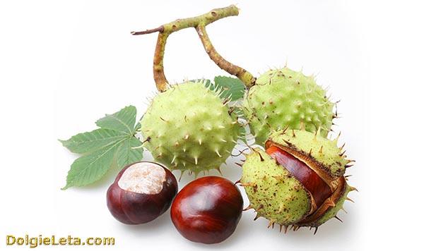 Плоды конского каштана: лечебные свойства