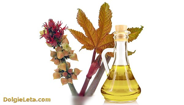 Состав и полезные свойства касторового масла