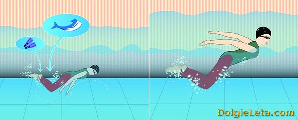 """Стиль плавания баттерфляй: другие названия """"дельфин"""" или """"бабочка"""""""