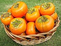 Спелая ягода хурма с полезными свойствами.