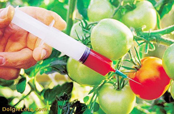 Черный список продуктов с ГМО в России.