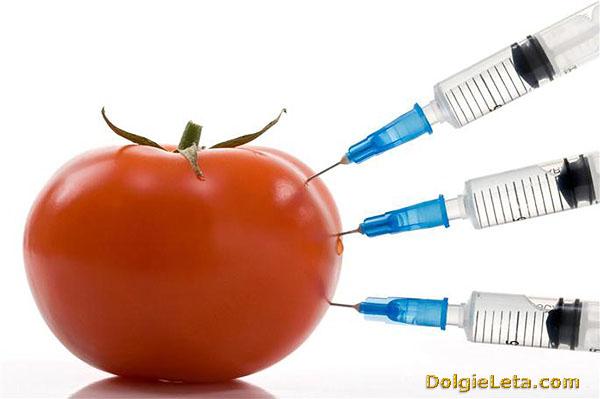 На фотографии генномодифицированный помидор.