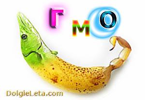 ГМО: расшифровка аббревиатуры, что это такое и черный список продуктов в России.