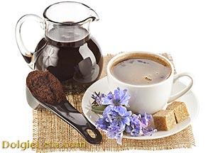 Цикорий: полезные свойства и противопоказания к употреблению напитка.