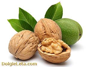 Грецкий орех: польза и вред для здоровья.