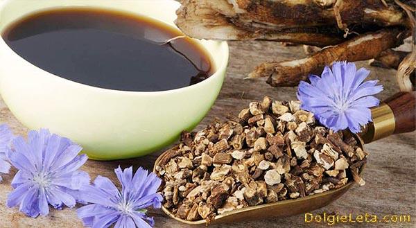 Лечебные свойства цикория.  Чем полезен цикорий для похудения?
