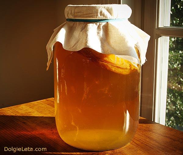 Чайный гриб: польза и вред,  приготовление и уход за Комбуча.