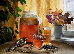 Чайный гриб: польза и вред напитка, приготовление и правильный уход.