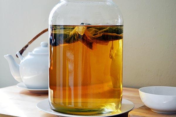 Как вырастить чайный гриб и правильно ухаживать за Комбуча.