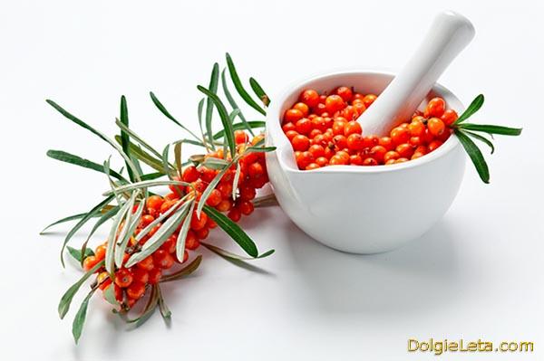 Веточка ягоды облепиха - польза и вред для употребления.