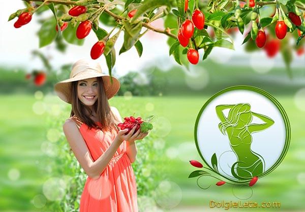 Дереза обыкновенная и ягоды годжи для похудения.