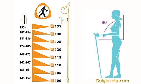 Ростовая таблица подбора длины палок для скандинавской ходьбы.
