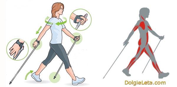 Методика и техника скандинавской ходьбы, какие работают мышцы.