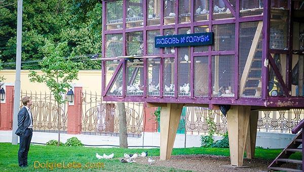 Голубятня в саду Эрмитаж - Любовь и голуби