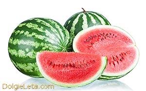 Спелые арбузы - полезные свойства - watermelon