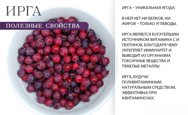Ирга - полезные свойства и противопоказания ягоды.