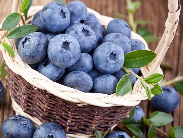 Где растет ягода голубика и когда созревает. Полезные свойства и противопоказания к употреблению.