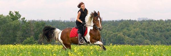 Конный спорт - девушка на лошади на зеленом поле.