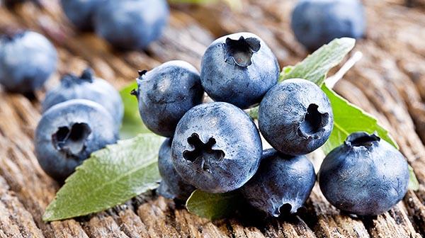 Польза и вред голубики. Чем полезна ягода для организма.