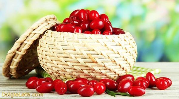 На фото спелые ягоды кизил в лукошке - польза и вред для организма и здоровья плодов.