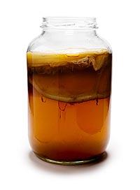 Комбуча - рецепт приготовления чайного гриба.