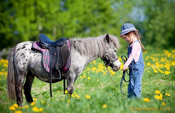 Пони и маленькая девочка - катание детей на пони.
