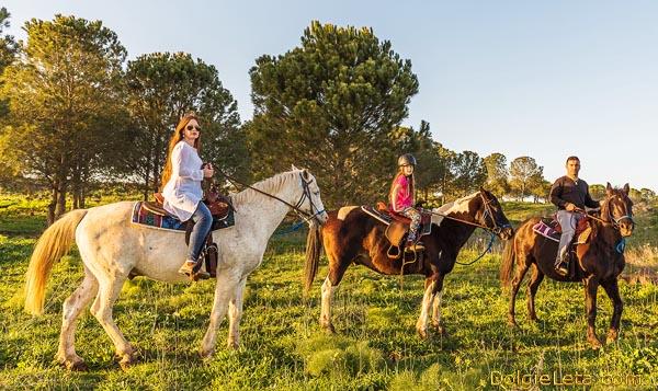 Семейные прогулки и катания на лошадях с детьми.
