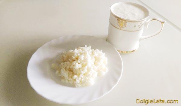 Как выбрать кефирный молочный гриб, цена - полезные свойства, уход, отзывы.