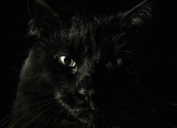 Черный цвет - Влияние черного цвета на настроение человека и состояние