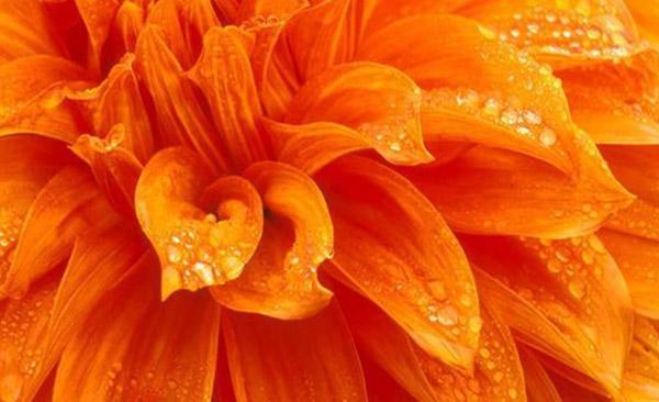 Влияние оранжевого цвета на настроение человека и состояние