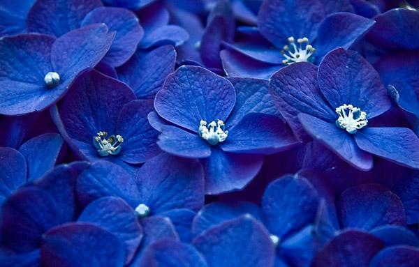 Синий цвет - Влияние синего цвета на настроение человека и состояние