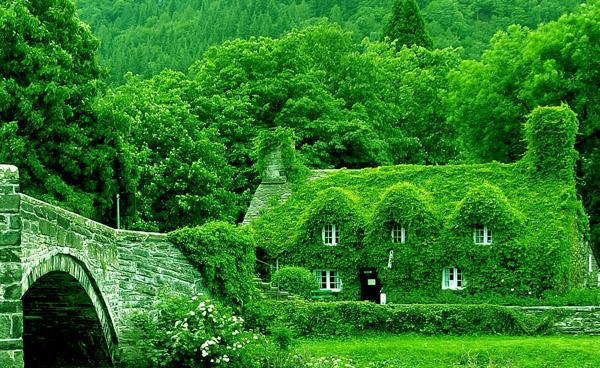 Зеленый цвет - Влияние зеленого цвета на настроение человека и состояние