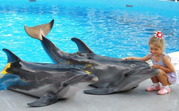 Дельфинотерапия для детей при нервных расстройствах