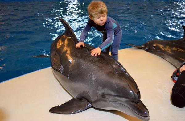 Курс дельфинотерапии