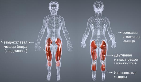 Какие мышцы работают на степпере