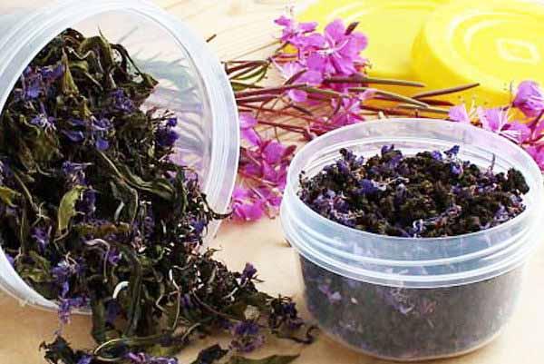 Иван-чай противопоказания и вред растения